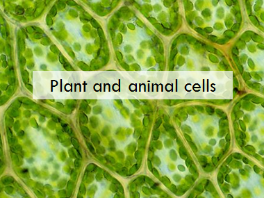 OFSTED rated Outstanding lesson on plant and animal cells