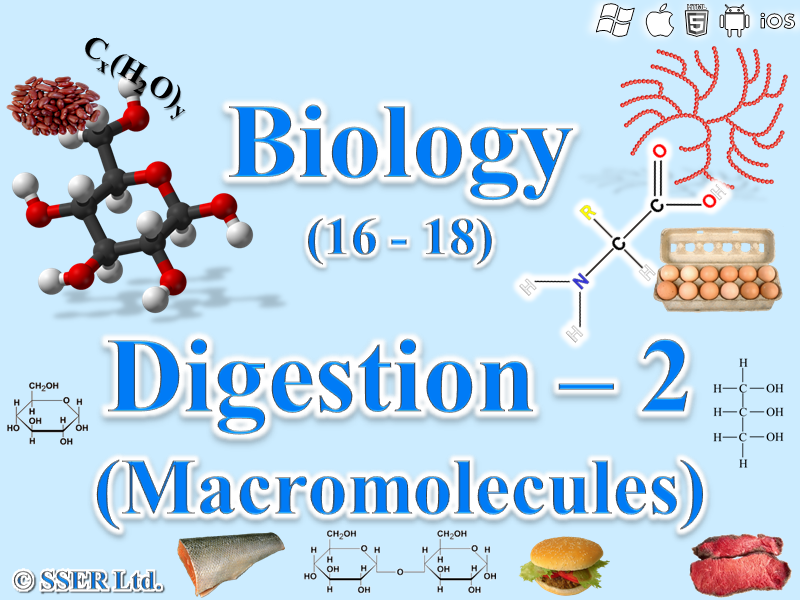 3.3.3 Digestion 2 - Digestion of Carbohydrates, Proteins and Lipids