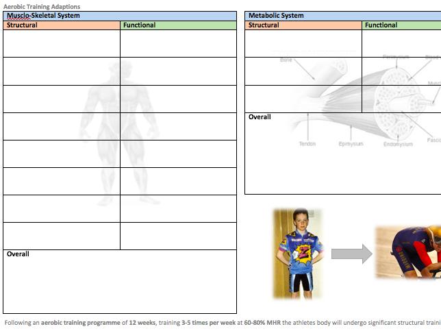 OCR A Level PE Aerobic Capacity Adaptations Revision A3 Worksheet