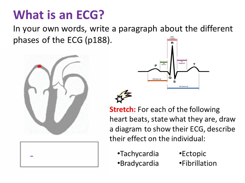 Electrical Control of the Heart - OCR AS/A Level Biology