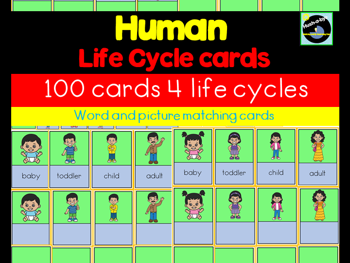 Human Life Cycle Sorting Cards