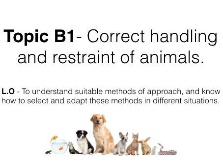 Unit two lesson 1: Correct handling and restraint of animals