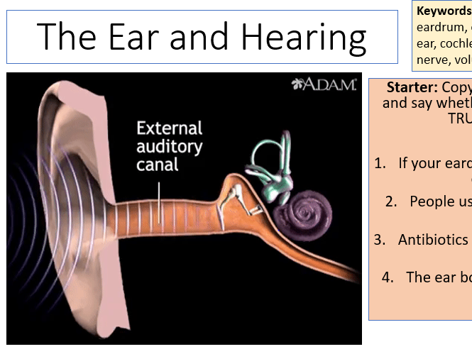 AQA Activate 1 KS3 The Ear and Hearing