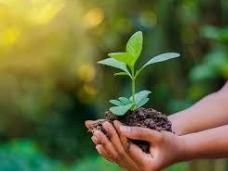 Horticulture SEN/Entry Level