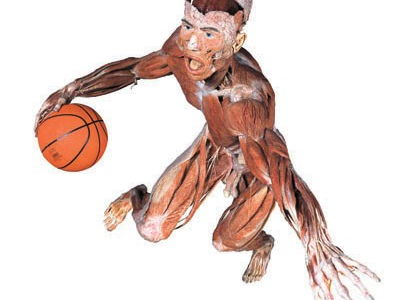 A Level PE, Lesson Bundle, Muscular and Skeletal Systems and Movement Analysis
