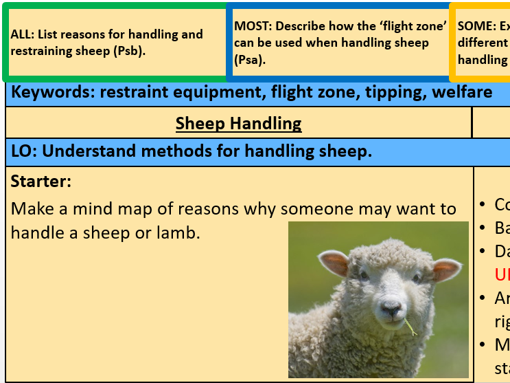 Sheep Handling (ppt and worksheets)