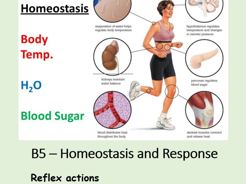 NEW AQA BIOLOGY GCSE - HOMEOSTASIS and RESPONSE - Lesson 3 – Reflex Actions & Required Practical