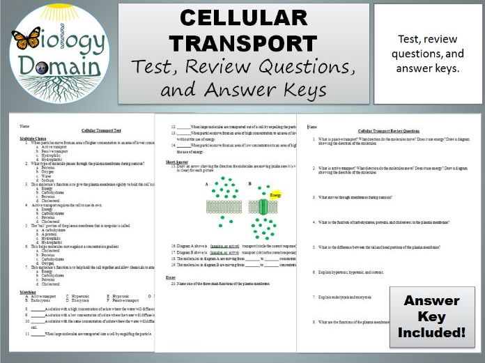Cellular Transport Test, Review Questions, and Answer Keys ...