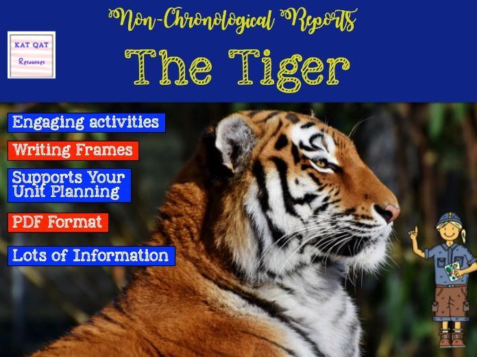 Non-chronological report writing - the tiger