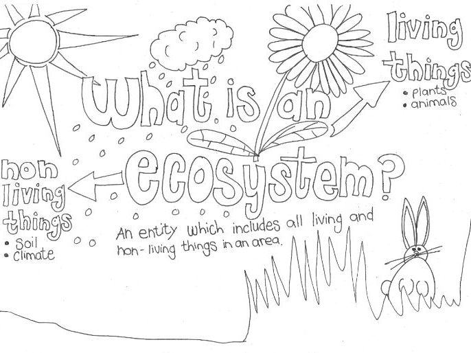 pond ecosystem coloring pages | Early years understanding the world teaching resources ...