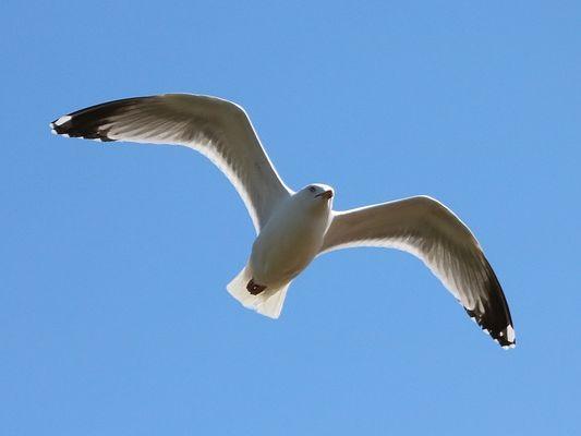 Birds in Flight Haiku Frames