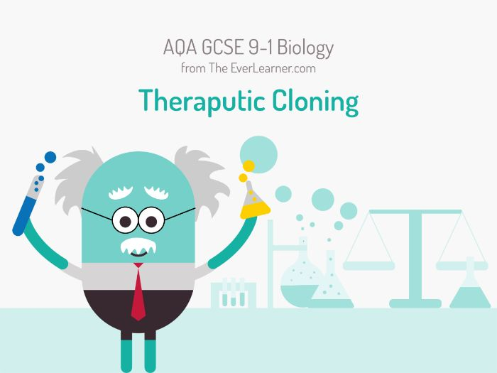 AQA GCSE 9-1 Biology: Theraputic Cloning