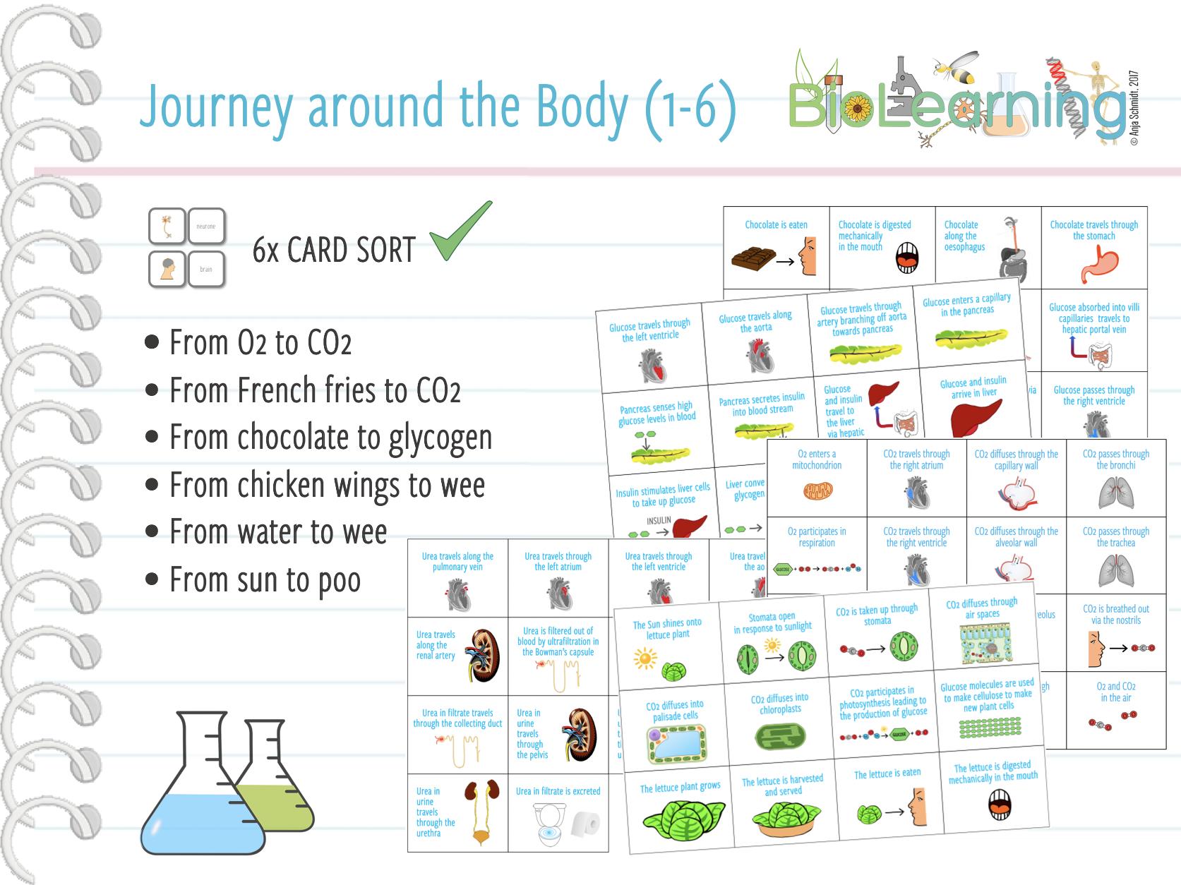 Journey around the body (1-6) - 6x Card sort Bundle (KS4)