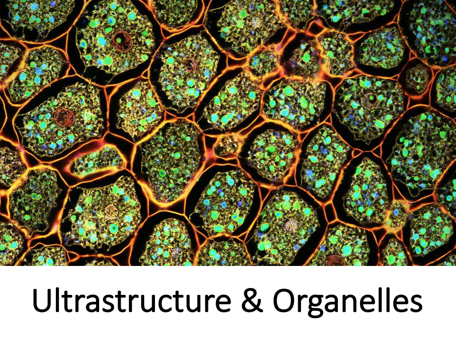 Cell Structure & Organelles