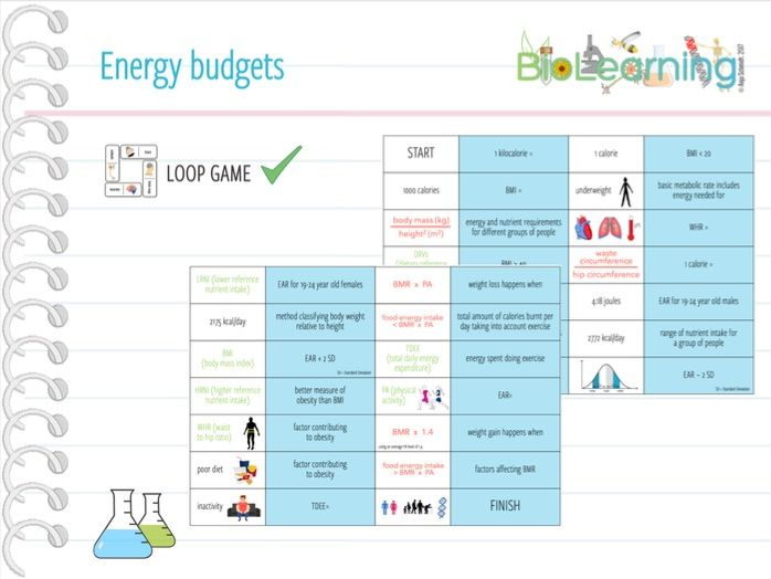 Energy budgets - Loop Game (KS5)