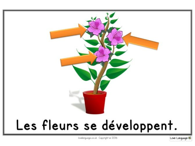 Life cycle of a plant in French - display posters