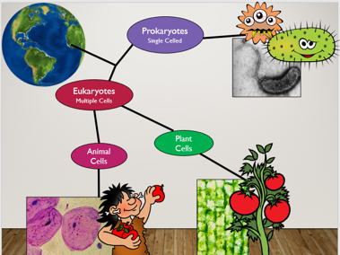 KS3 Unicellular and multicellular