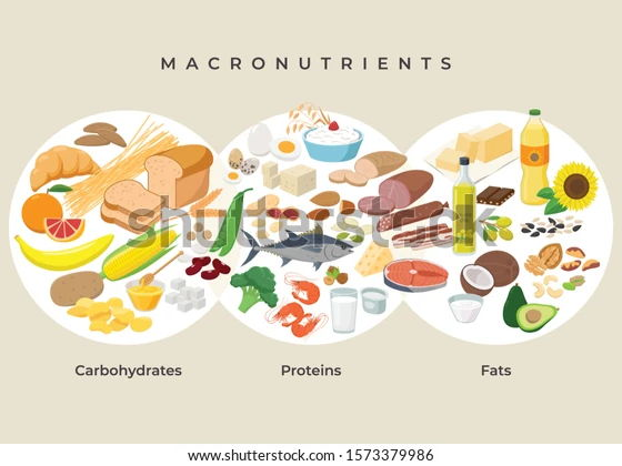 Macro Nutrients Protein, Fat and Carbohydrates