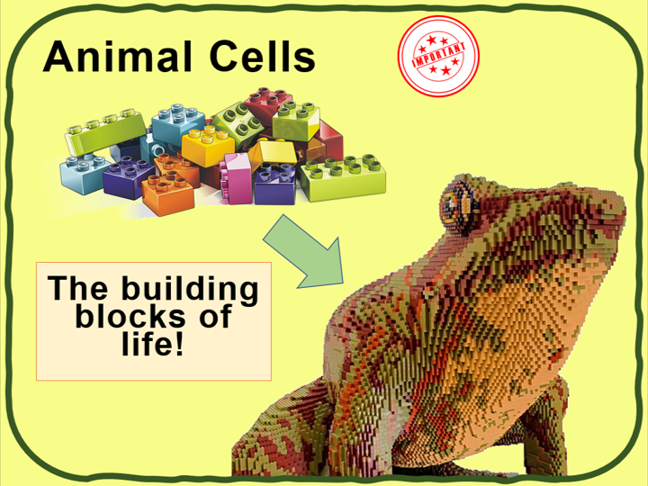 Animal cells - KS3 Low Ability | Teaching Resources