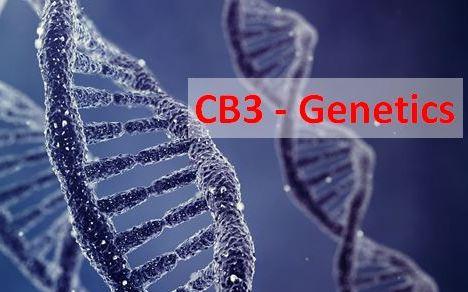 CB3 - Edexcel 9-1 GCSE Biology:  lesson 1-7 + admin. DNA, Meiosis, variation, alleles, mutation