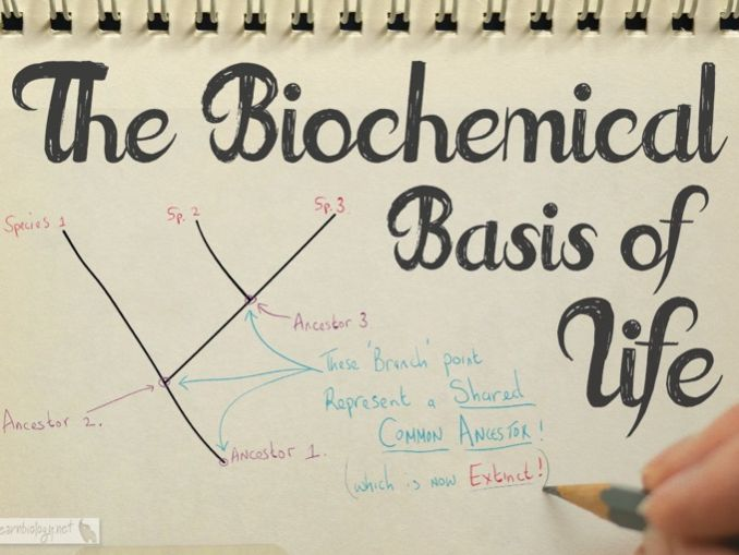 A-Level Biology: The Biochemical Basis of Life Revision Video, Notes & Worksheet