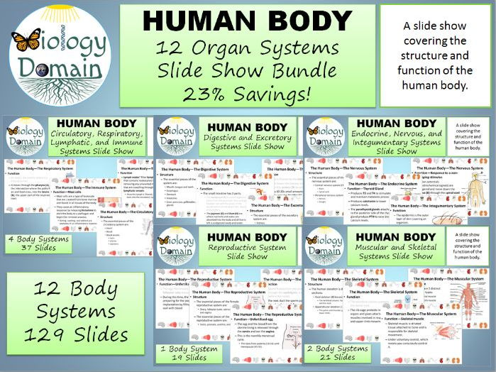 Human Body Systems Slide Show
