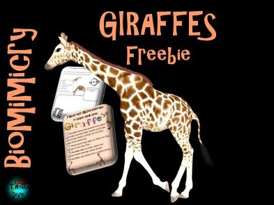 Project based learning: Giraffes Freebie - STEAM, Biomimicry, KS1, NGSS