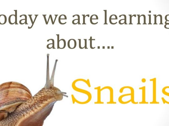 Year 1 Science Snail Investigation