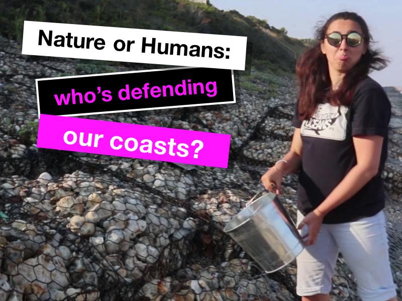 Hard and soft engineering - coastal defenses case study