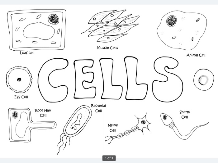Cells Poster to colour in - start of term activity science