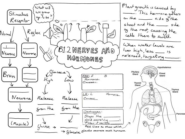 B1 AQA Biology GCSE Revision Pages by Module