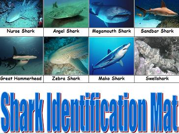 KS1 & 2 Shark Identification mat