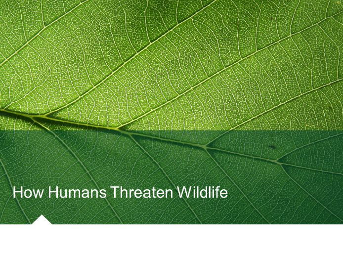 How Humans Threaten Wildlife (Introduced/Eradicated Species) Environmental Science/Studies