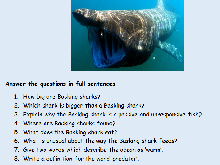 KS2 Y4, 5, 6 Set of 8 comprehension texts and questions on the topic 'Sharks'