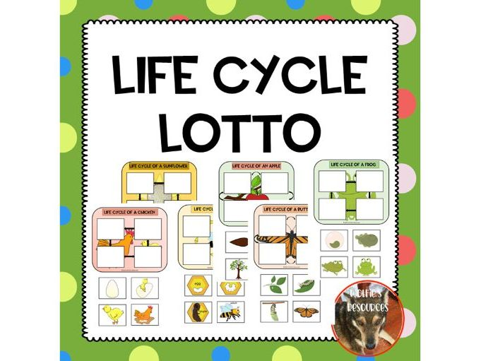 Life Cycles Lotto Game