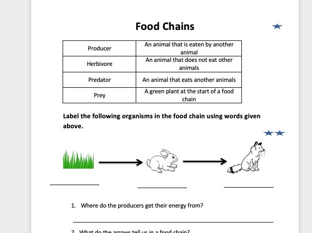 Primary Food Chain  Worksheet