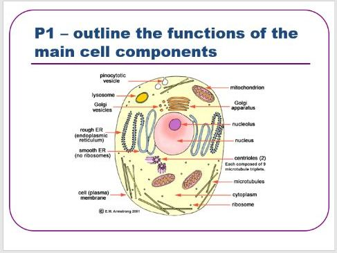BTEC level 3 Health and Social Care : Unit 5 - (A&P) - Cell Components