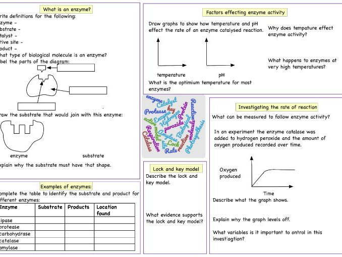Enzyme Graph Worksheet Www Picswe Com