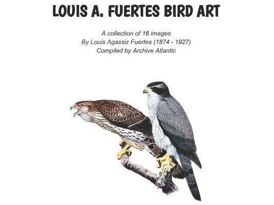 LOUIS A. FUERTES - BIRD ART