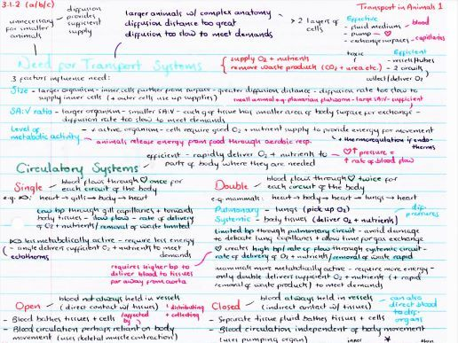 OCR A Level Biology Transport in Animals Revision Poster