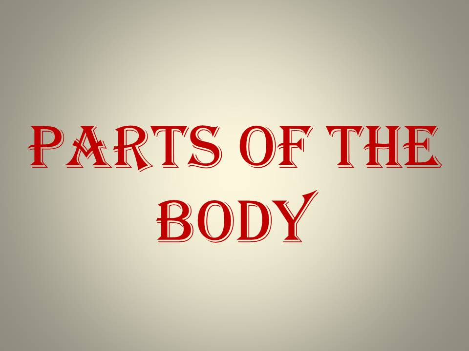 LET'S TALK ABOUT BODY PARTS
