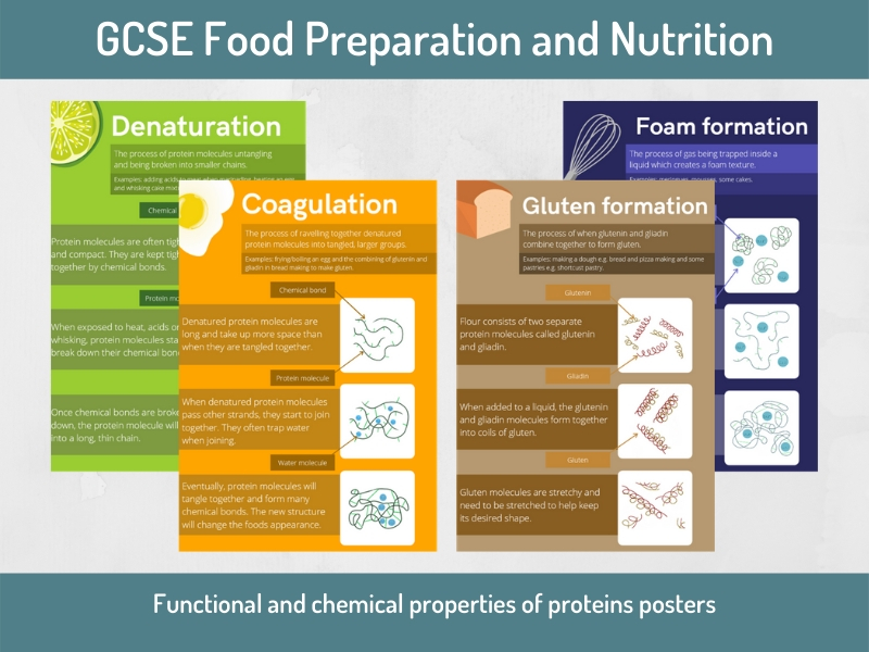 Posters: Functions and chemical properties of proteins (GCSE Food Preparation and Nutrition)