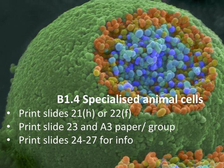 SB1.4 Specialised animal cells (AQA 9-1 GCSE Biology ...