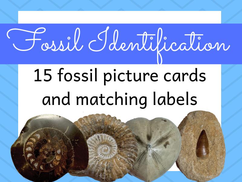 Fossil Identification Activity