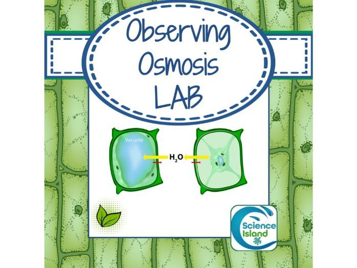 Osmosis Lab: Observing the Effects of Osmosis in Plant Cells