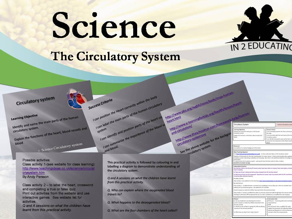 KS2 Science Circulatory system