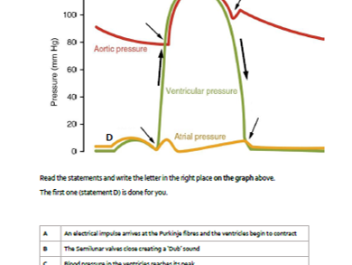 A&P CV System: Cardiac Cycle Living Graph