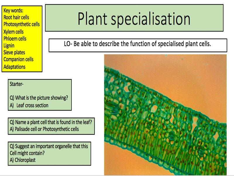 Plant specialisation