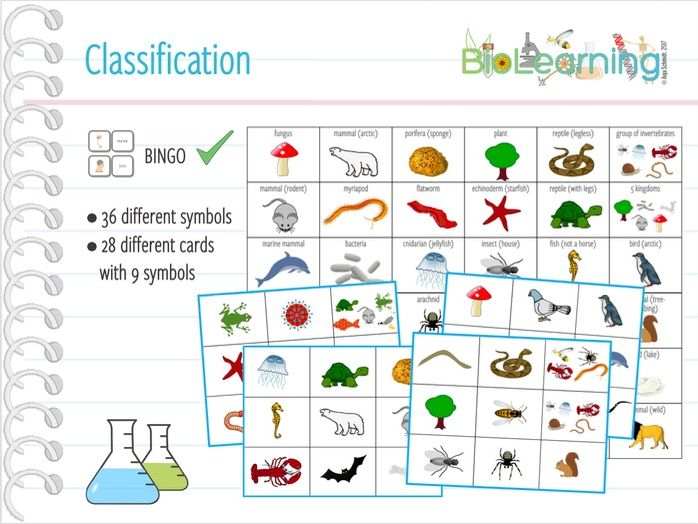 Classification - Bingo Cards (KS2/KS3)
