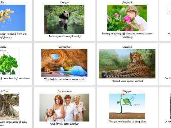 Visual Vocabulary The Great Kapok Tree
